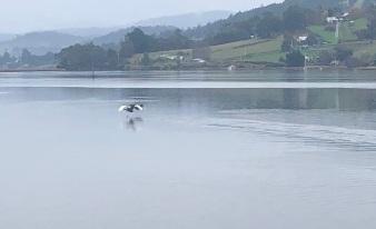 10 Swans take flight 2